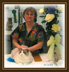 Dollheaven Ragdoll Traveler receiving his Supreme Grand Champion